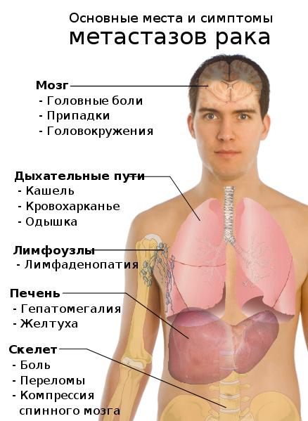 Анализы на гепатиты в и с в спб