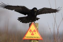 Радиационное излучение - причина рака