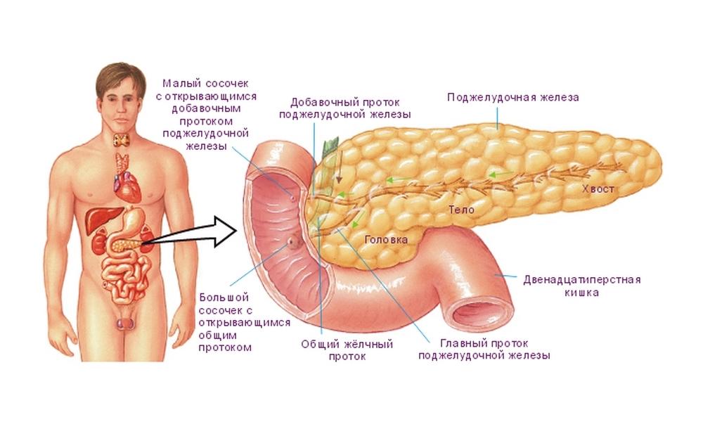Поджелудочная железа биохимический анализ крови