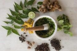 Рецепты на растительных ингредиентах