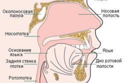 Схема рака носоглотки