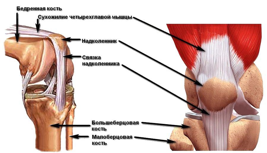 сустав в колене как называется