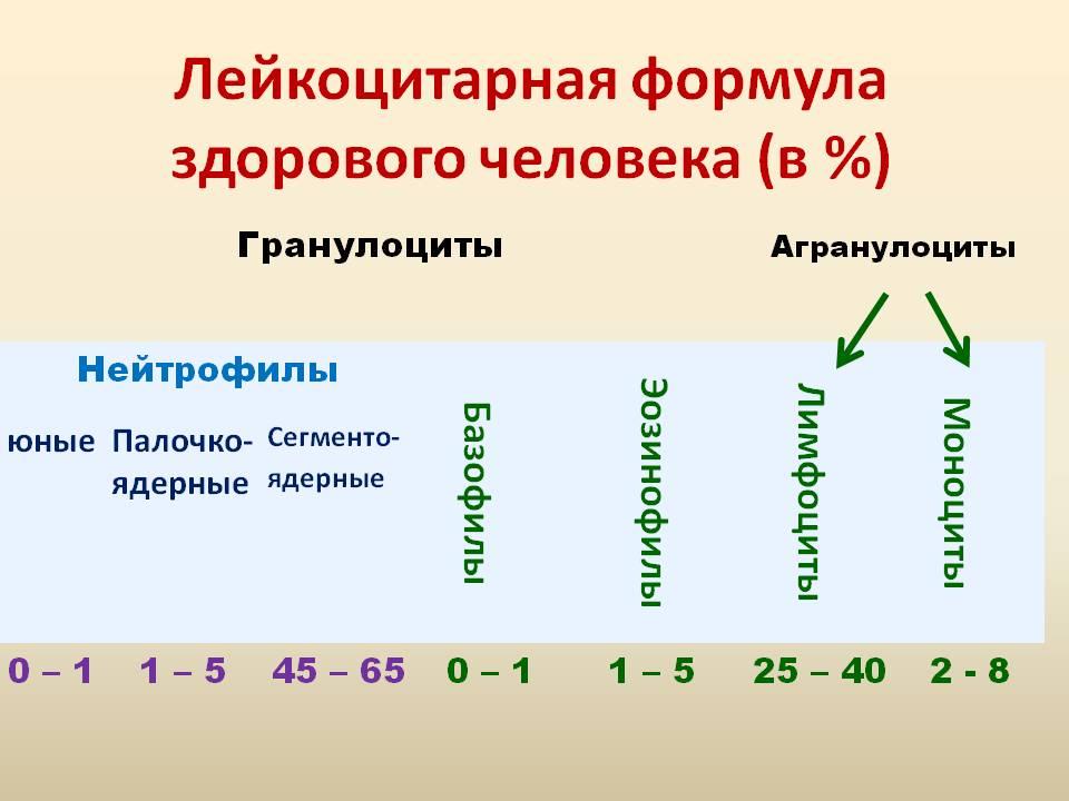 Определение лейкоцитарной формулы фото